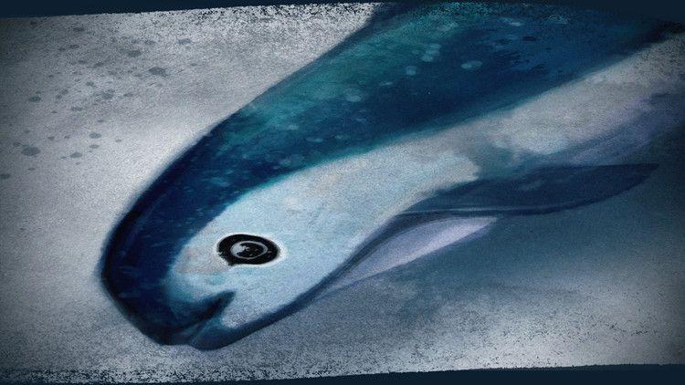 Vaquita The Business Of Extinction Cnn Business Extinction Animals Prey