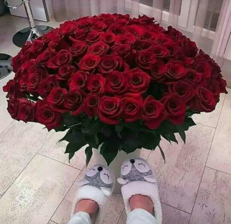 خلفيات ورود جميلة جدا 2019 اجمل صور ورد في العالم 2020 فوتوجرافر Amazing Flowers Beautiful Pink Roses Beautiful Rose Flowers