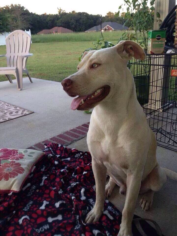 Founddog 10414 Jacksonville FL Male needs a home by
