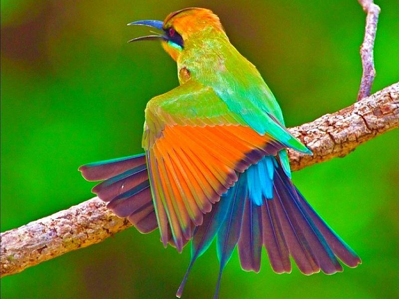 Beautiful Bird Rainbow Bird Animals Birds Hd Desktop Wallpaper Most Beautiful Birds Beautiful Birds Birds