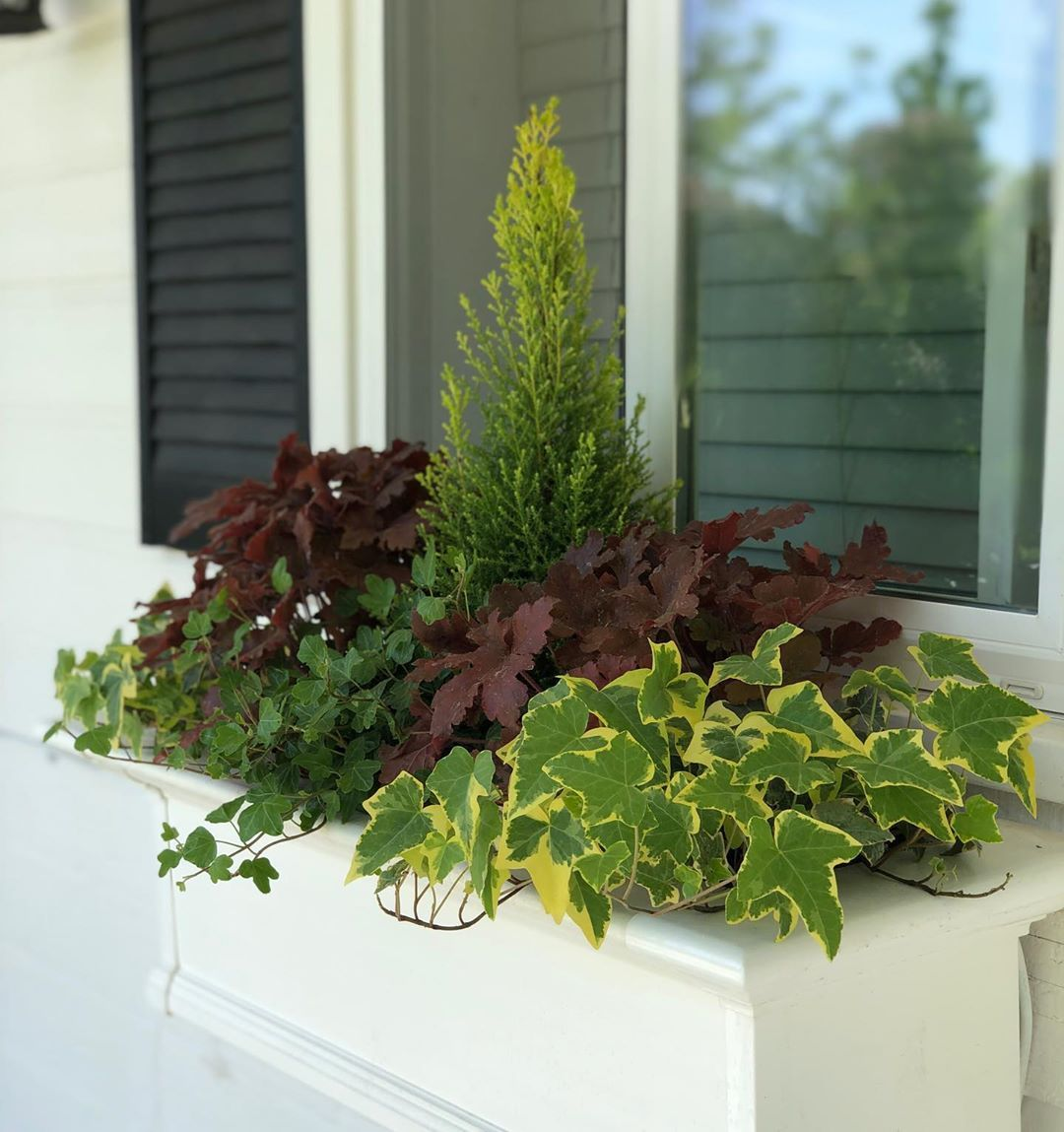 I Just Put Together This Window Box For 0 Dollars 0 This Year