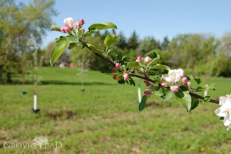 Shots from our newly planted apple orchard