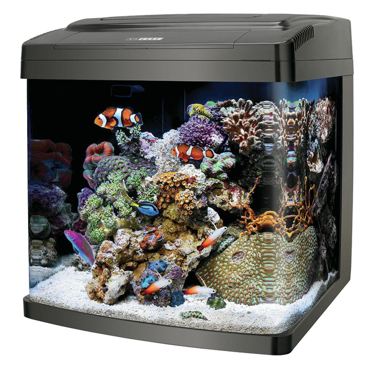 Coralife Biocube 14 Gallon Aquarium Kit Saltwater Aquarium Beginner Aquarium Systems Aquarium Fish