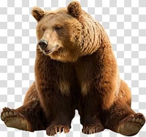 Polar Bear Portable Network Graphics Transparency Bear Transparent Background Png Clipart Brown Bear Illustration Brown Bear Art Bear Sketch
