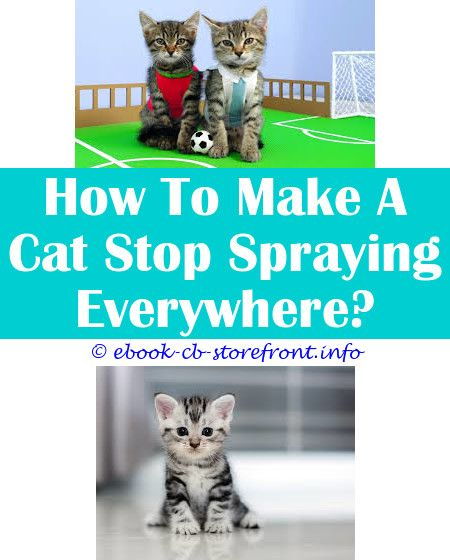 15 All Time Best Herbs To Stop Cat Spraying Cat Spray Male Cat Spraying Flea Spray For Cats