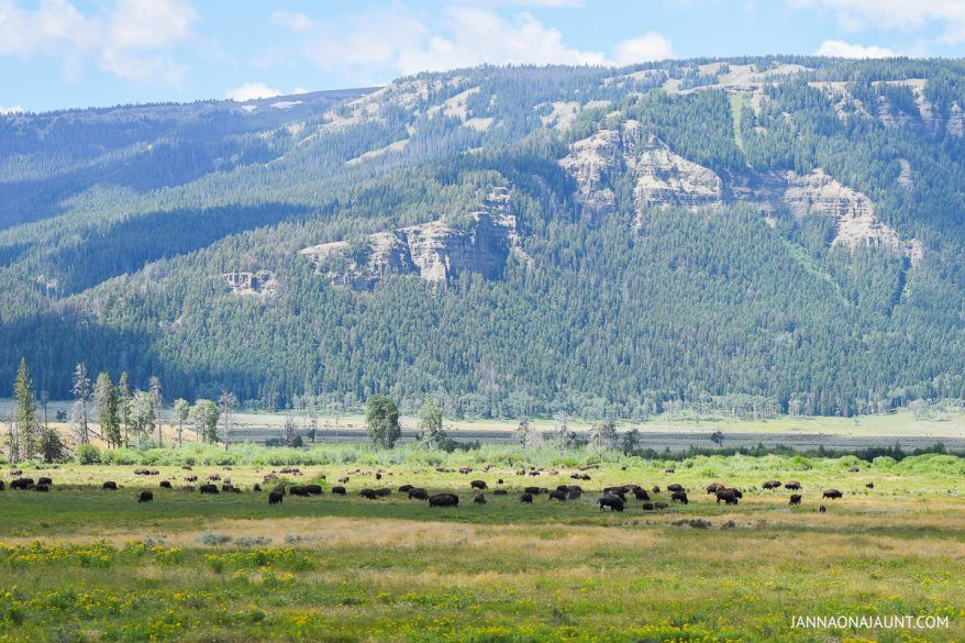 The Ultimate Travel Guide to Yellowstone Yellowstone