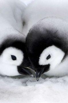 pinguinos enamorados tattoos - Buscar con Google