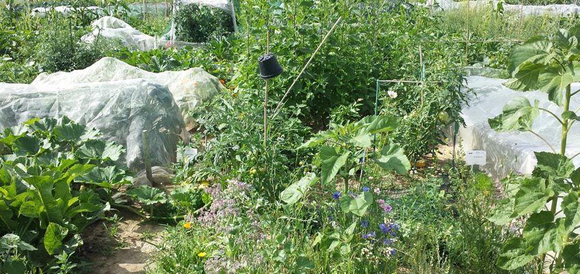 Gemüse Im August Pflanzen