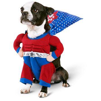 Petco Halloween Superhero Boy Dog Costume Dog Halloween Costumes