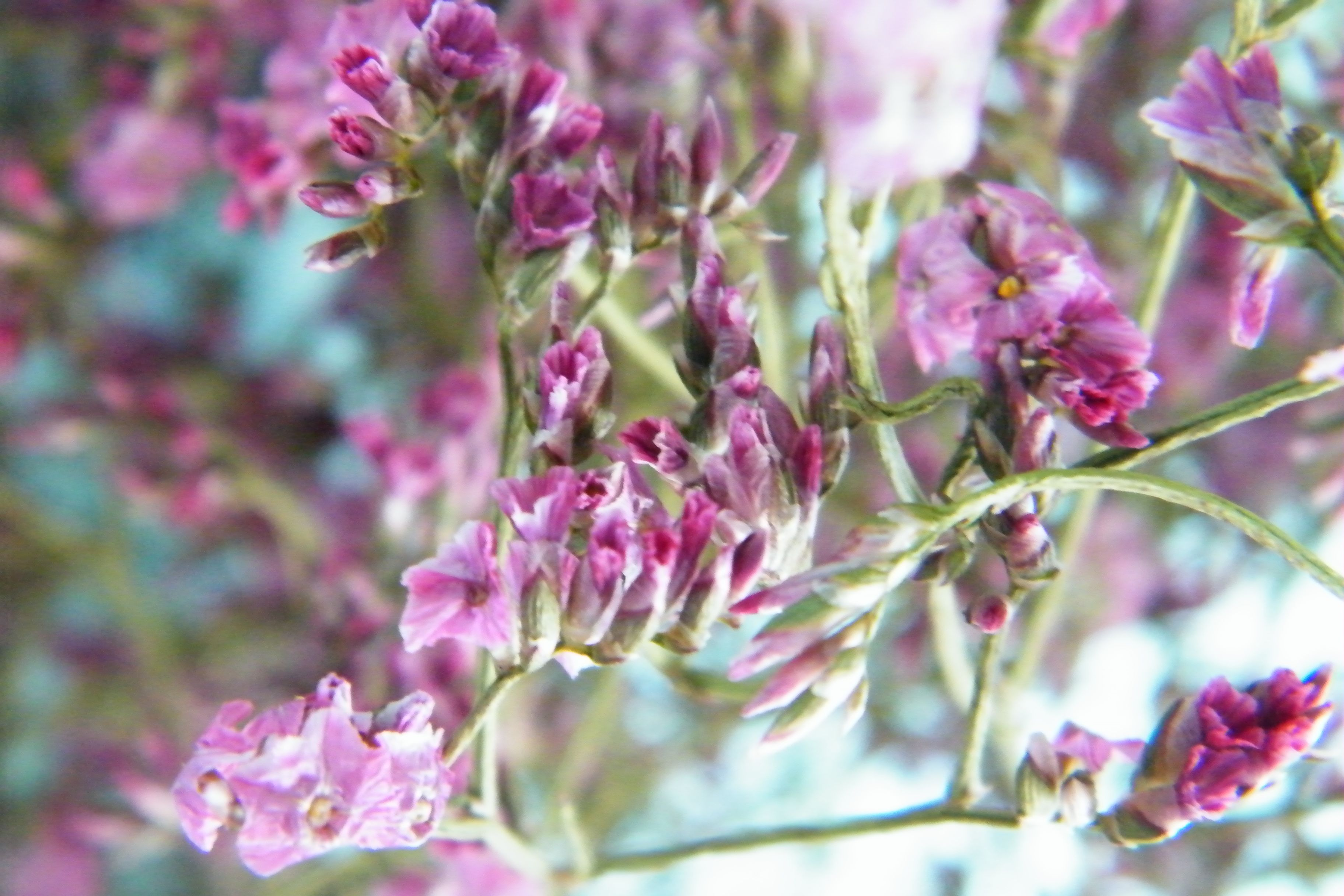 Pretty pink dried sea lavender http://driedflowercraft.co.uk