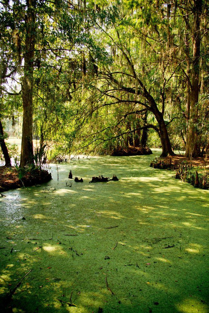 John Chestnut Park Palm Harbor Florida Florida Parks Florida State Parks
