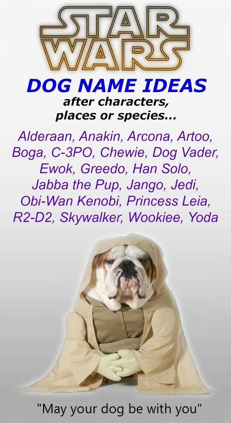 Unique Dog Names Helpful Guide To Finding The Best Name