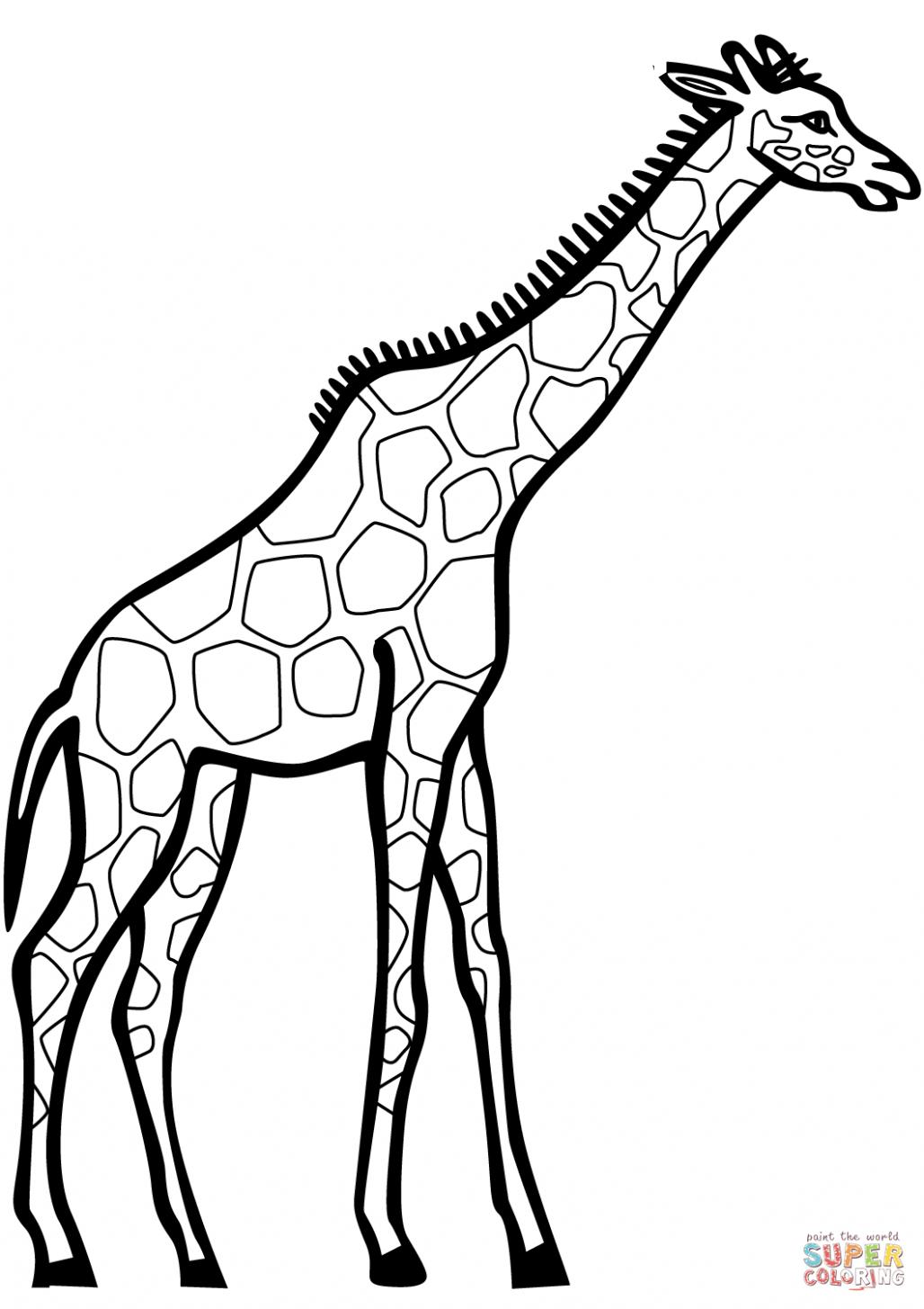Giraffe To Color : giraffe, color, Giraffe, Color, Coloring, Pages,, Colors