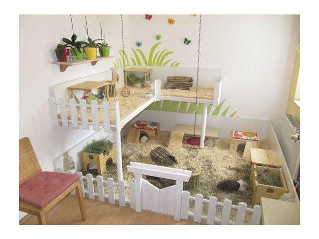 les lapins hamsters cochons d inde gerbilles rats. Black Bedroom Furniture Sets. Home Design Ideas
