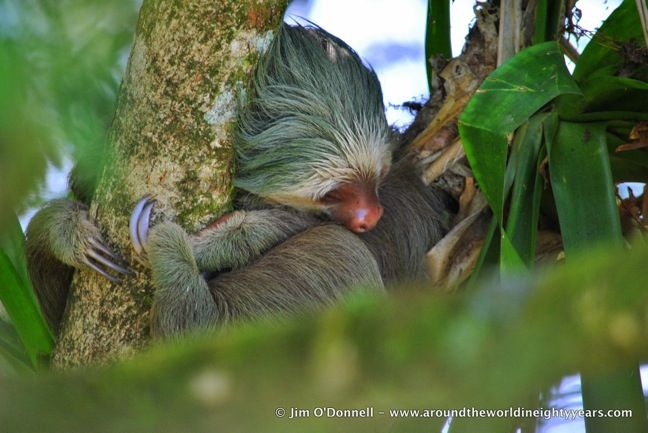 A Guide To 40 Amazing Costa Rica Animals Costa Rica Animals Sustainable Travel Wildlife