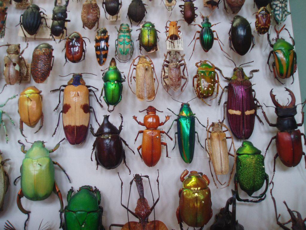 11+ Animal crossing new leaf bugs ideas
