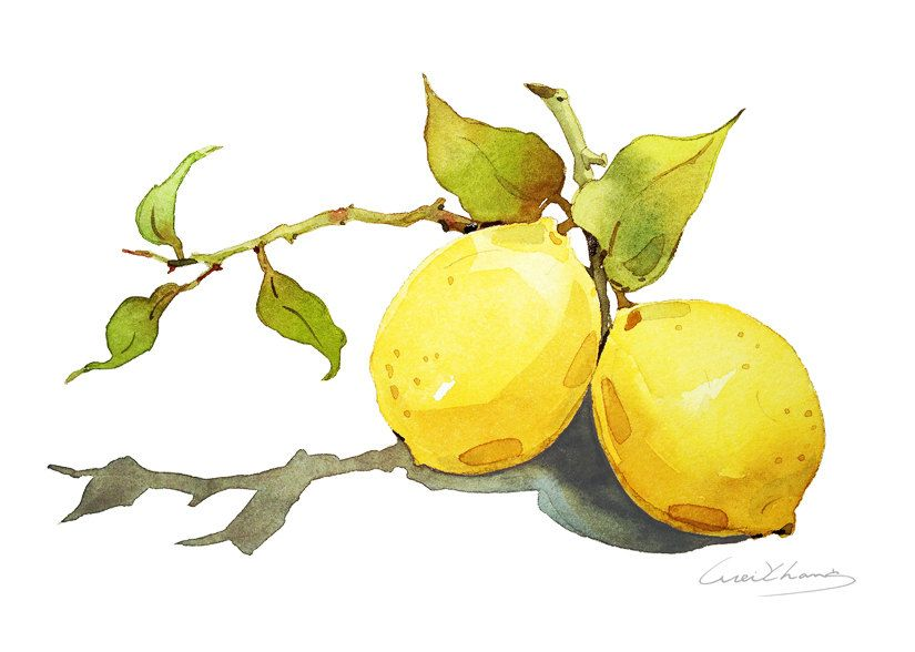 Limón pintura acuarela limón impresión de 5 por por blackteacafe ...