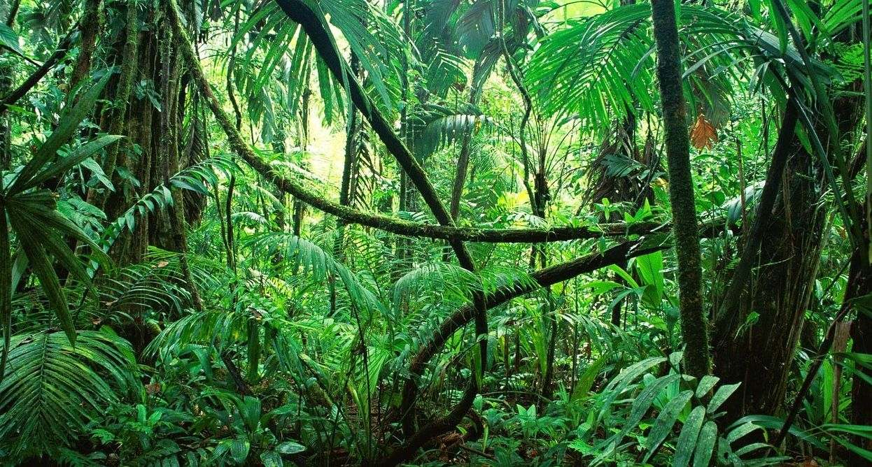 Hugedomains Com Jungle Images Jungle Wallpaper Rainforest Plants