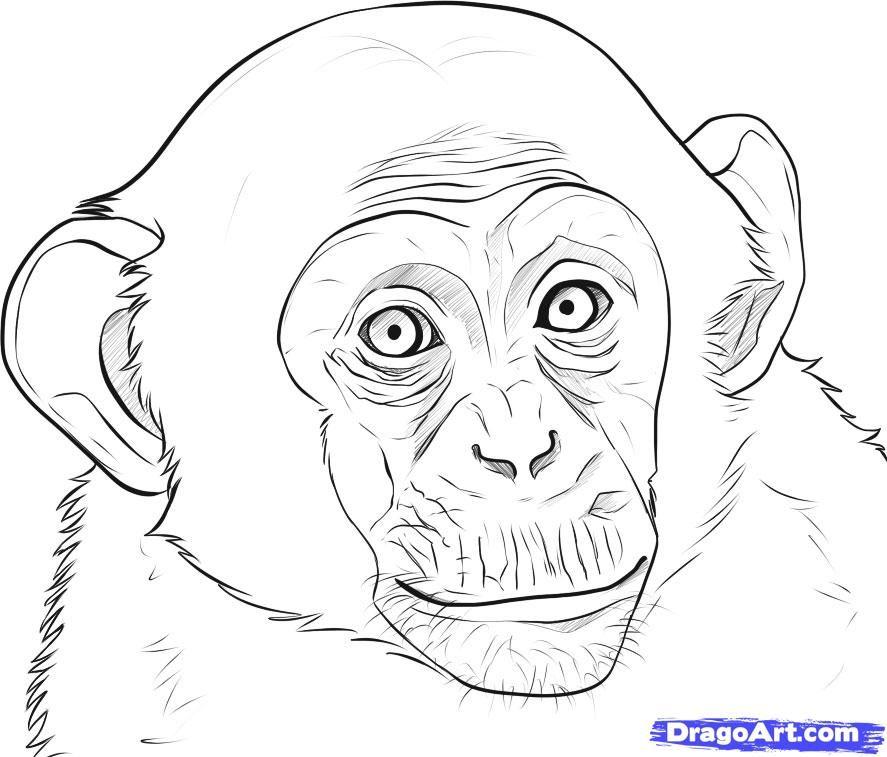 Рисунок обезьяны для срисовки, днем рождения моем