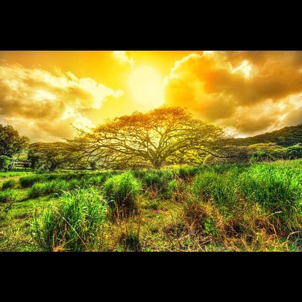 Sunset at Kualoa Ranch in Oahu, Hawaii