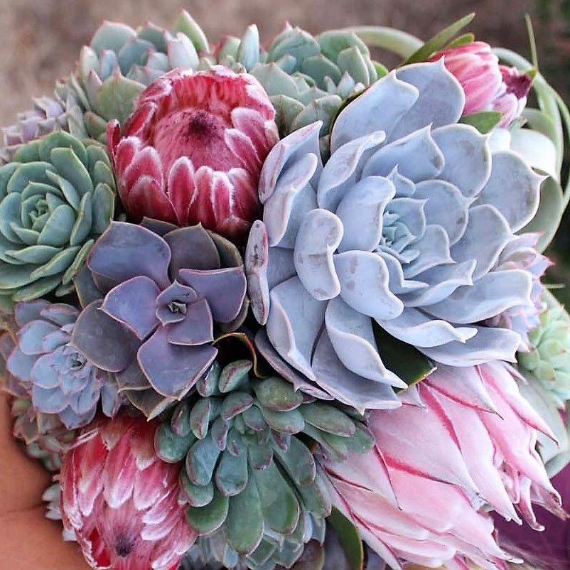 Buy fresh wholesale succulents online. DIY Small succulent