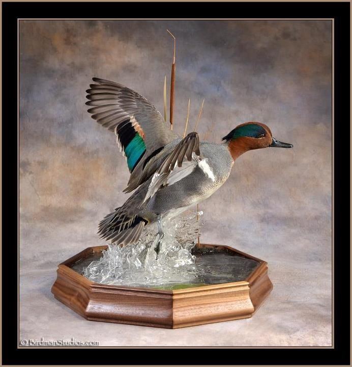 E Unlimited Home Design: Wood Duck House Plans Ducks Unlimited