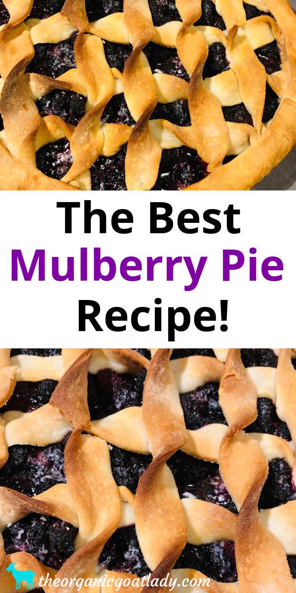 The Best Mulberry Pie Recipe The Organic Goat Lady Recipe Mulberry Pie Mulberry Recipes Recipes