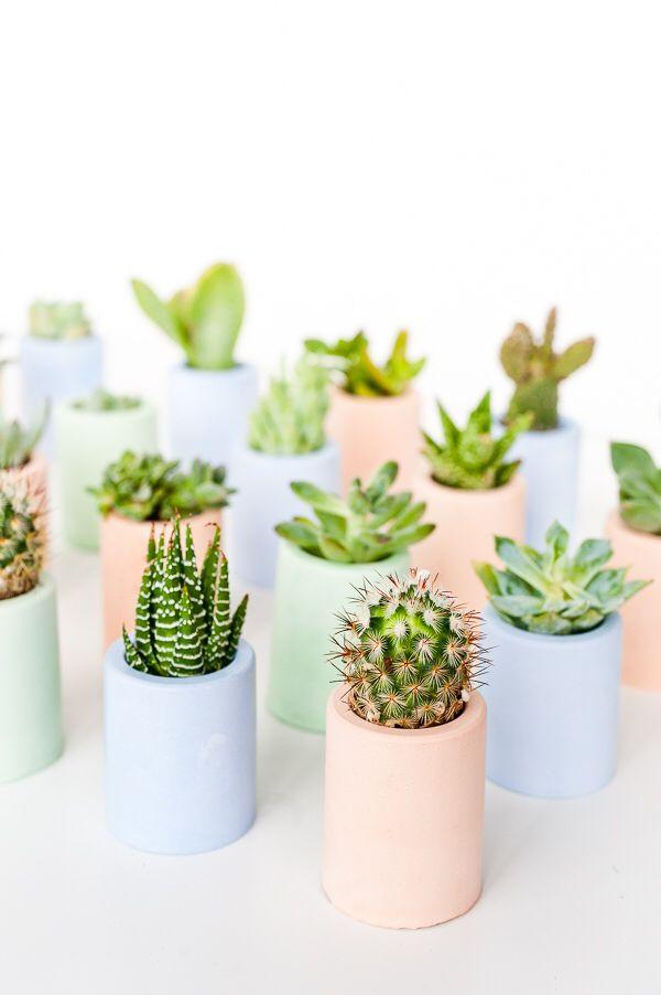 plante grasse chambre