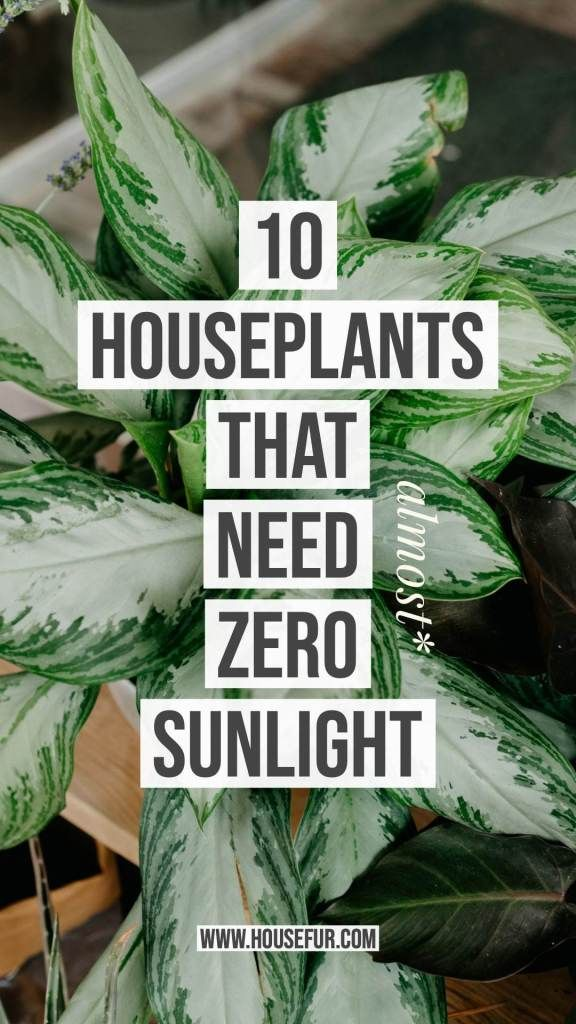 10 Houseplants That Need (Almost) Zero Sunlight | House Fur #plantsindoor