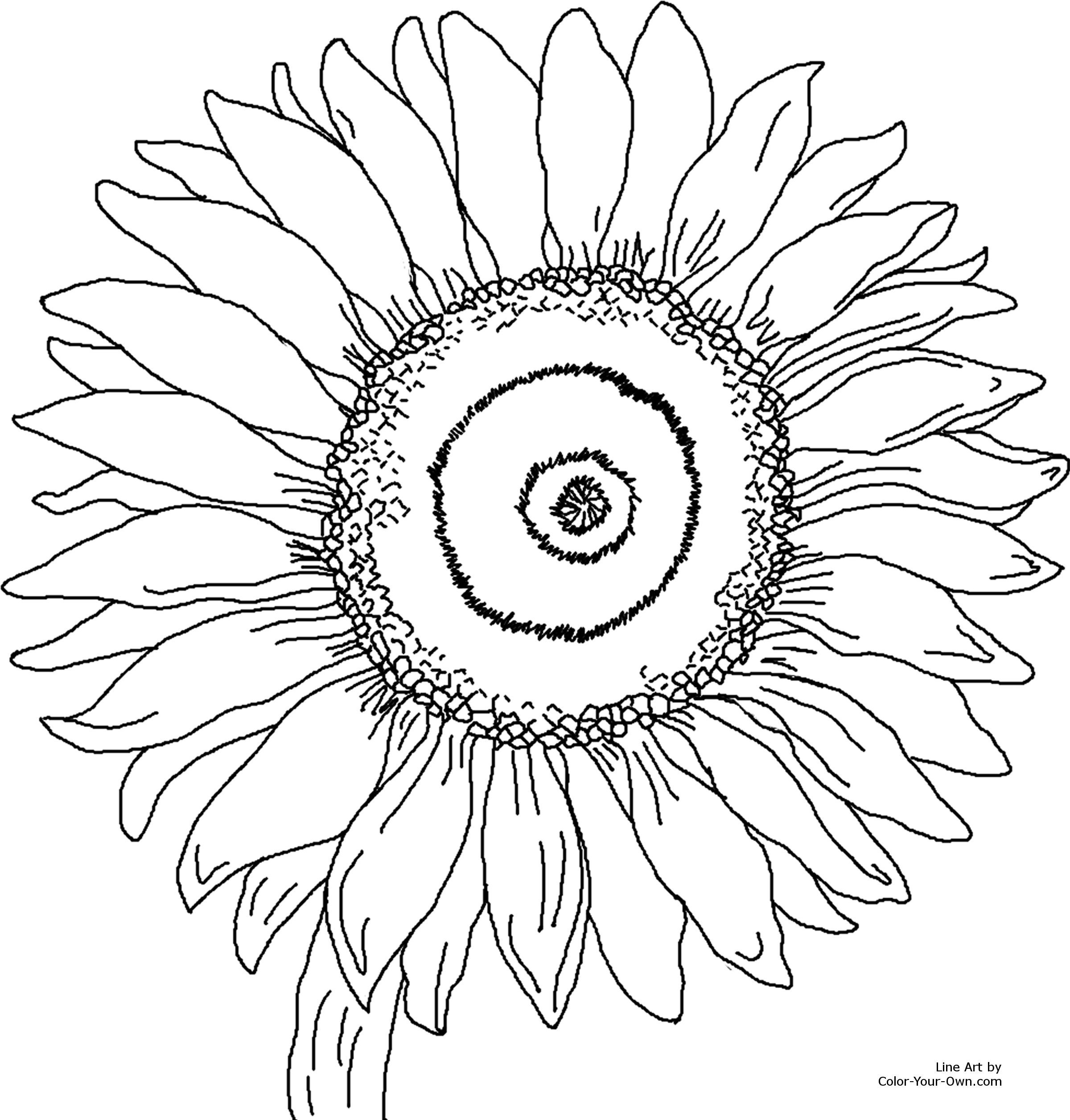free coloring pages to print bing images design