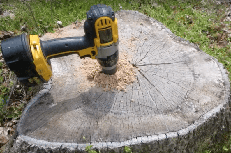How To Easily Remove A Tree Stump For A Bargain Tree Stump
