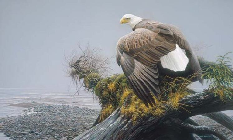 Robert Bateman Vantage Point Blad Eagle