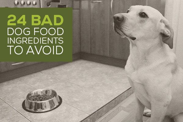24 Bad Dog Food Ingredients To Avoid Our Life S Abundance Dog And
