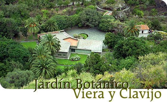 Jard n bot nico viera y clavijo las palmas de gran - Jardin botanico las palmas ...