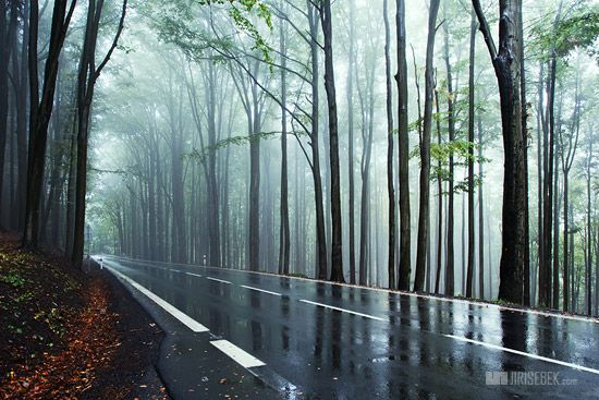 Beautiful Rain Fog Road Scene Rainy Photos Woods Photography Natural Beauty