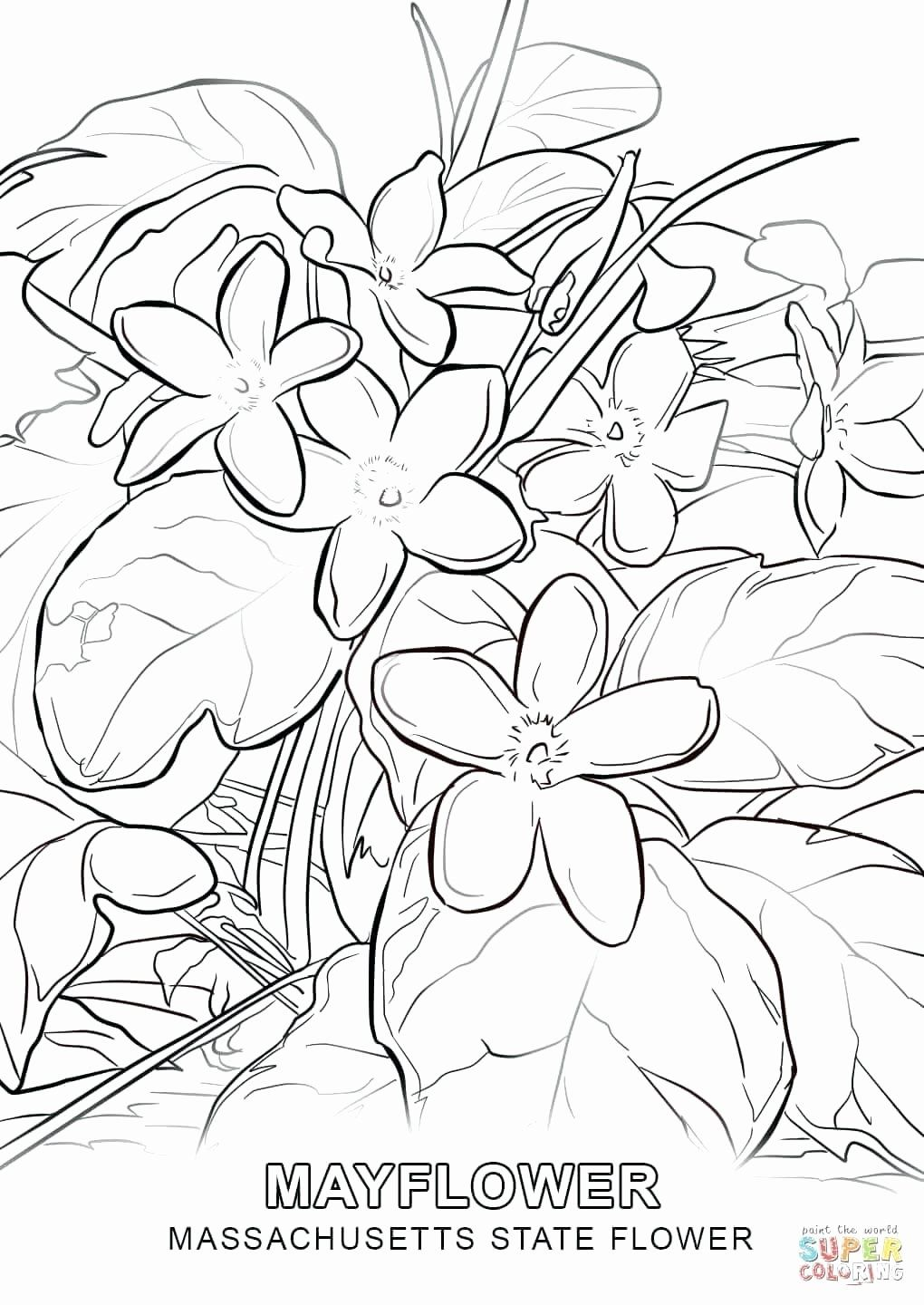 Florida State Flower Coloring Page Elegant Alabama State Flower