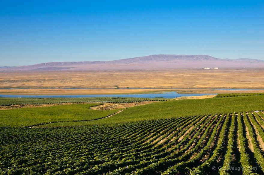View From Sagemoor Vineyards To Columbia River Hanford Nuclear Site And Rattlesnake Mountain Columbia Valley Wash Oregon Travel Washington Vineyards Scenery