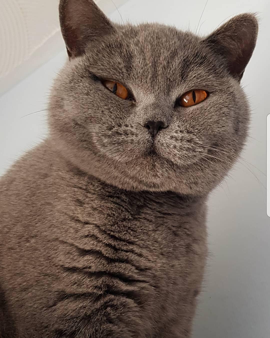 Look at that face, always happy neko cat cats gato