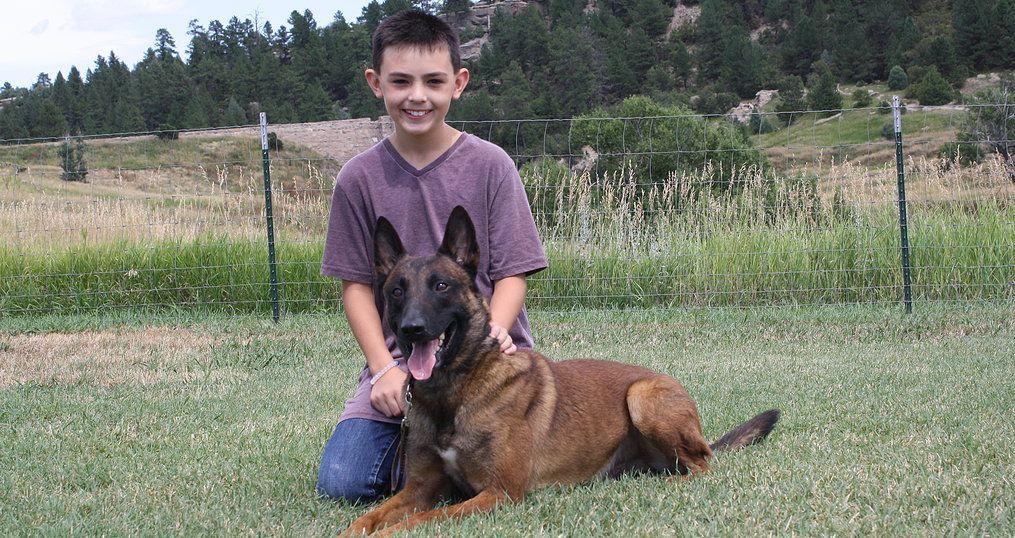 Prestige K9 Is Colorado S Premier Dog Training Company Serving