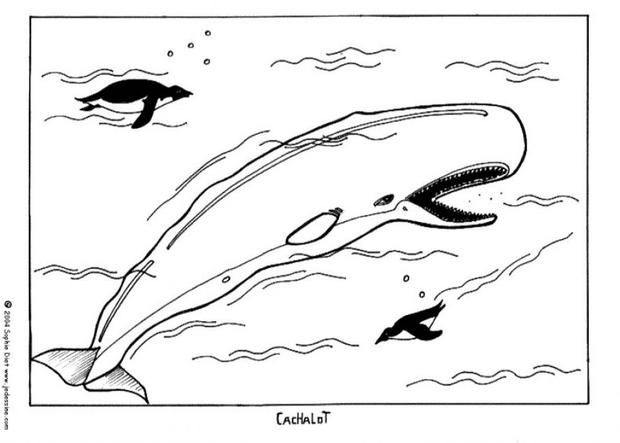 sperm whale coloring page nice coloring sheet of sea world more content on hellokids