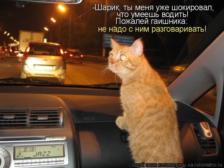 фото кошки ради которой хозяйка продала машину это удивительно