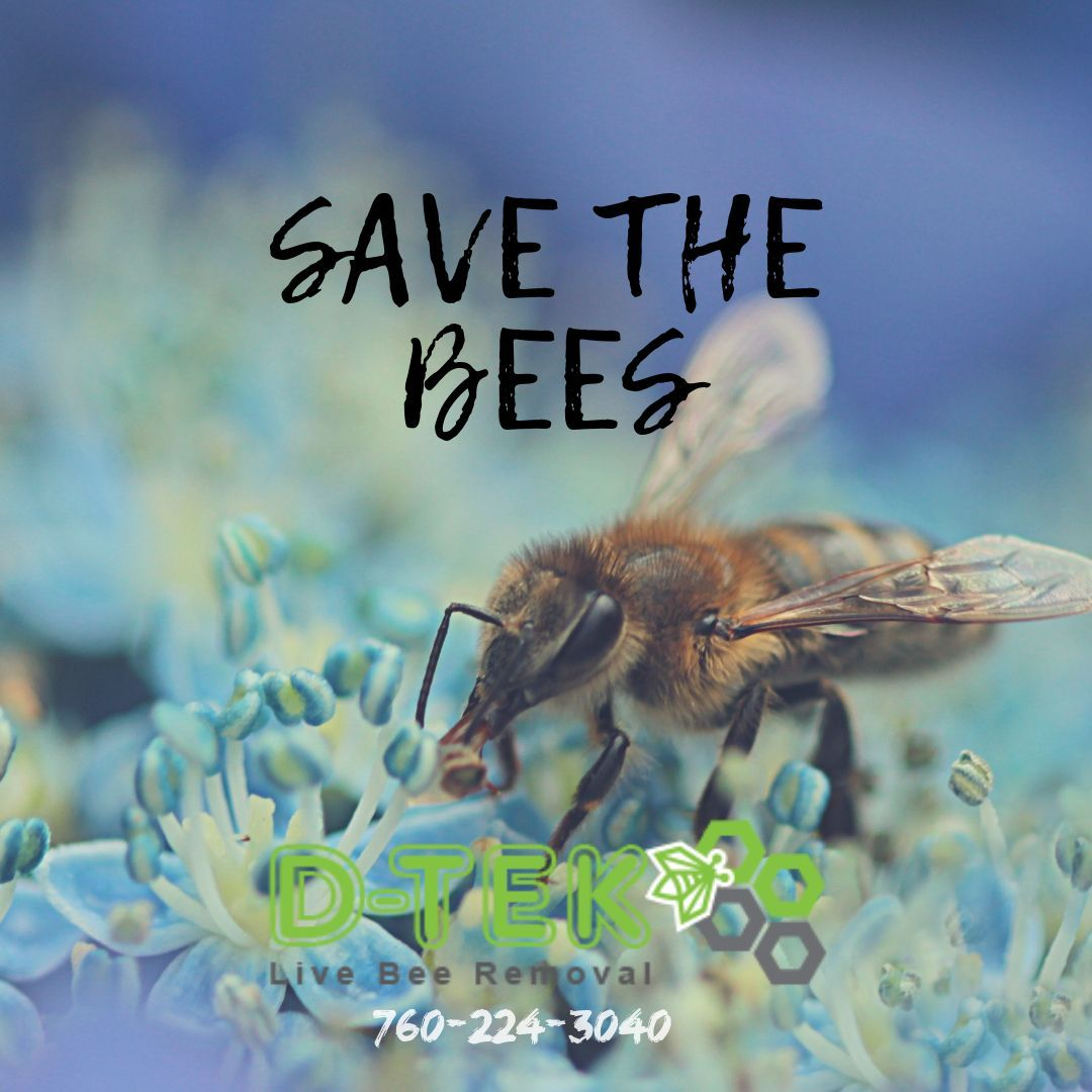 Bees Have A Very Important Role In Our Ecosystem In Fact They Are Responsible For Approximately 80 Percent Of The Pollinat Bee Removal How To Remove Bee Hive