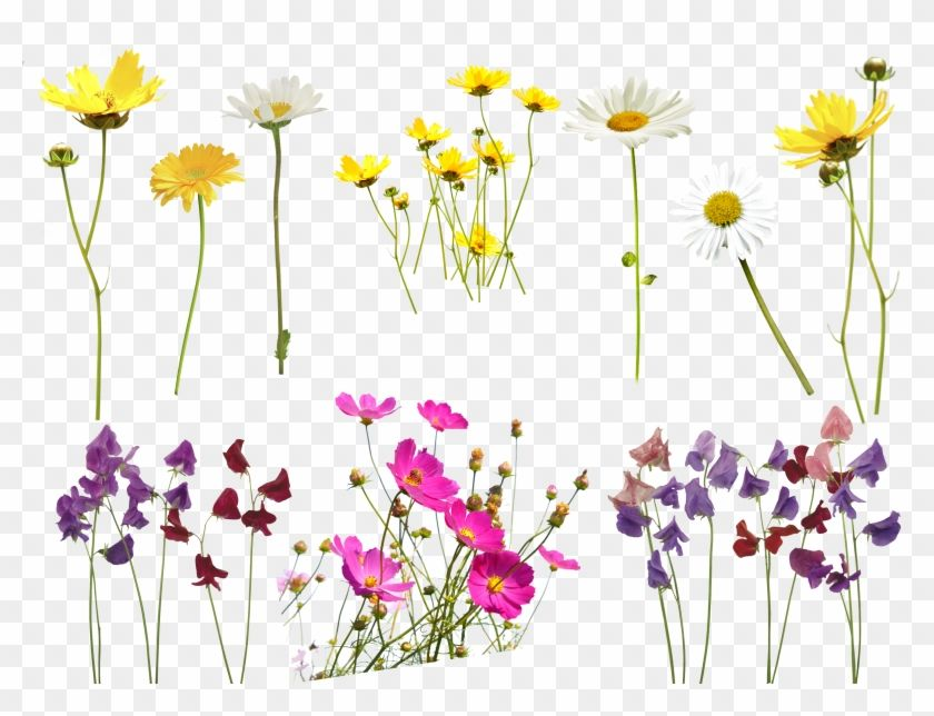 Find Hd Flower Overlay Png Transparent Background Photoshop Flower Overlay Png Download To Search An Overlays Transparent Photoshop Flowers Blue Flower Png