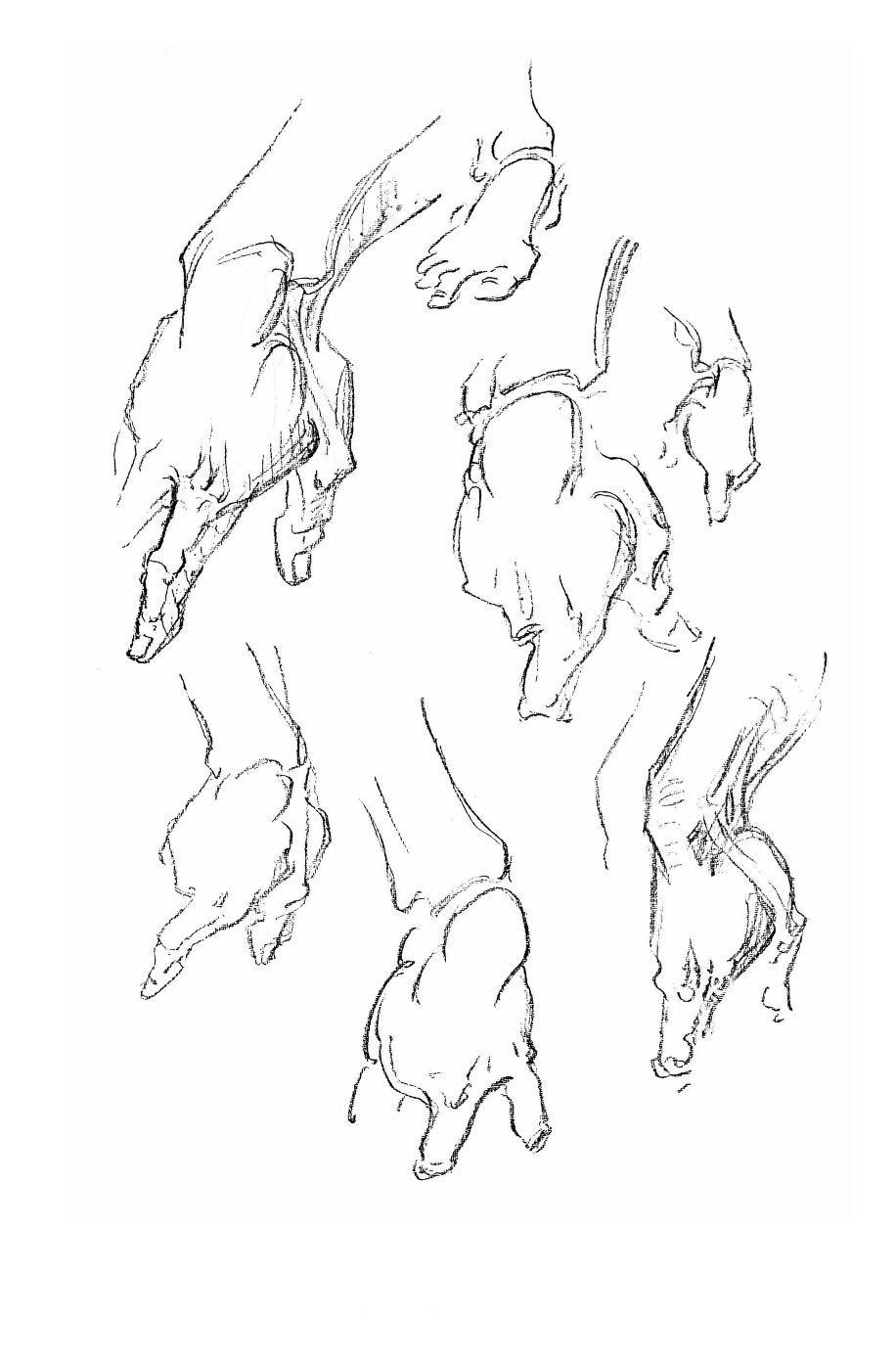 Constructive Anatomy by George Bridgman   AnatoRef - Art Anatomy ...