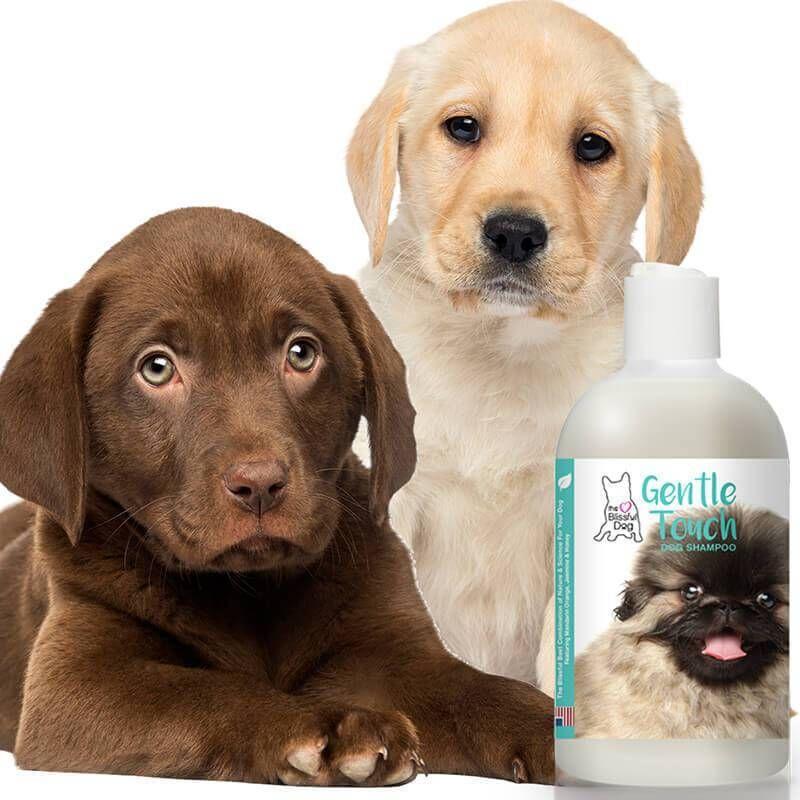 Gentle Touch Dog Shampoo Dog Shampoo Puppy Shampoo Dog Shaking
