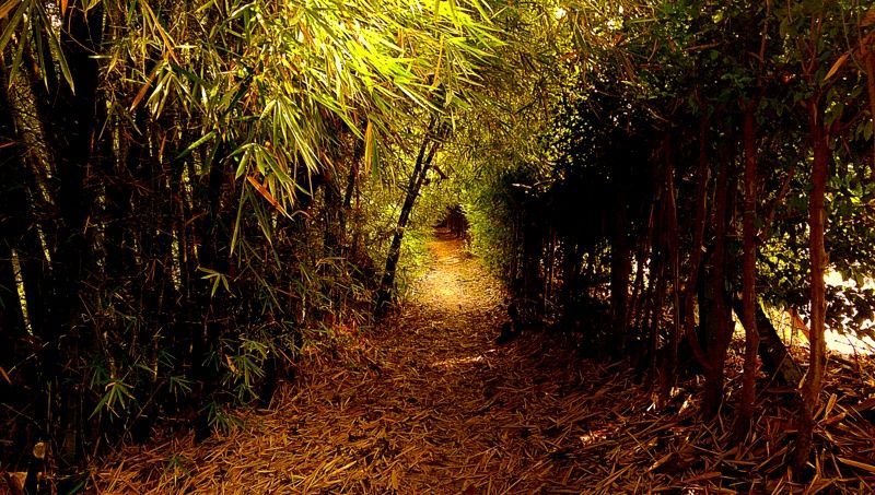 Caminos perdidos del Parque La Flora II