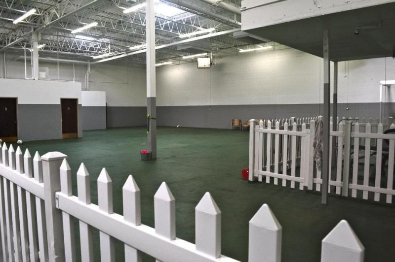 Puppy Room Ruff House Indoor Dog Park Dog Goes With Images