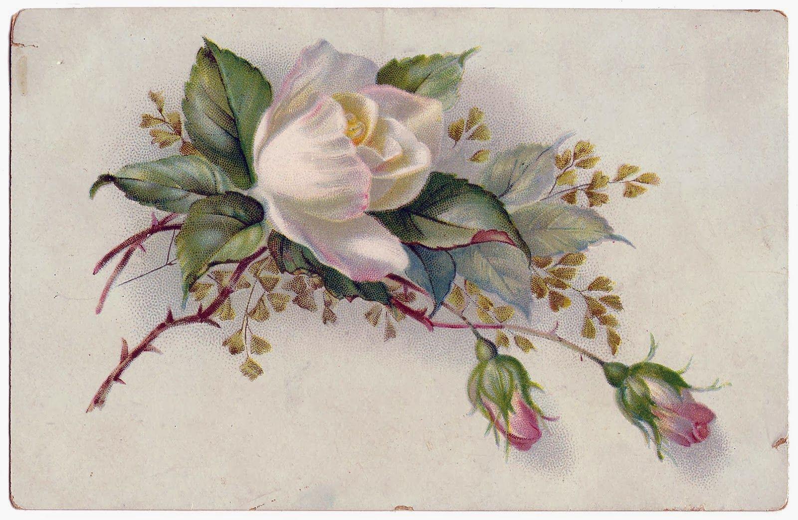 Цветы в старых открытках, картинки