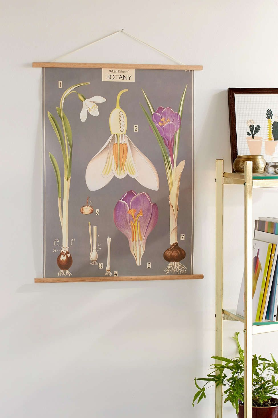 Hanging botany art print botany apartments and spaces