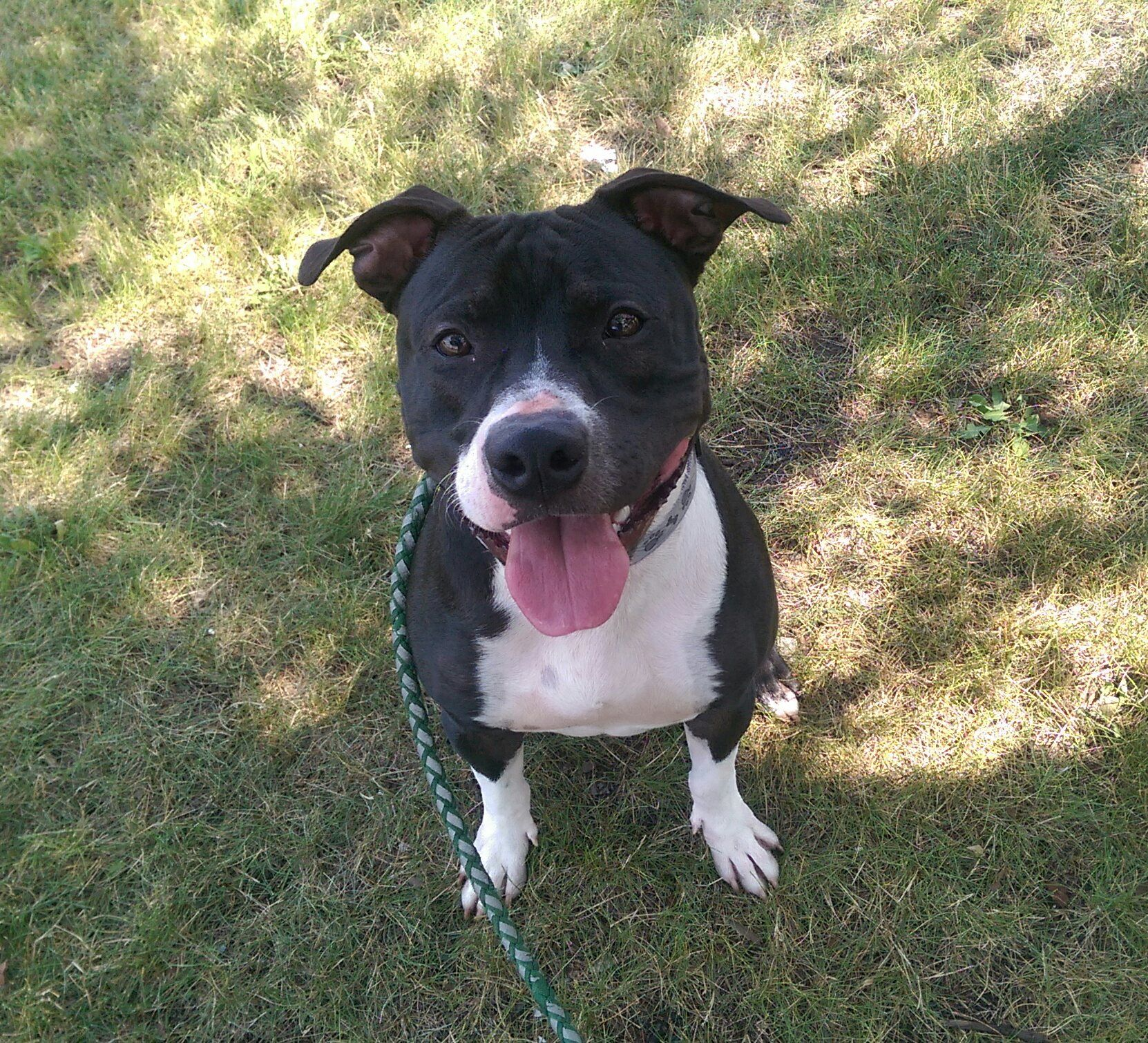 Handsome Aka Juke Box Is Waiting For His Forever Home At The Perth